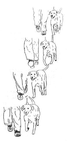поводить вашу собаку