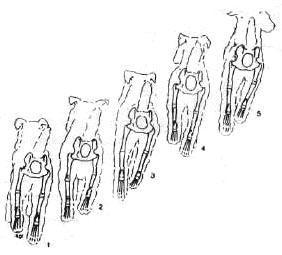 Движение ног в одной плоскости