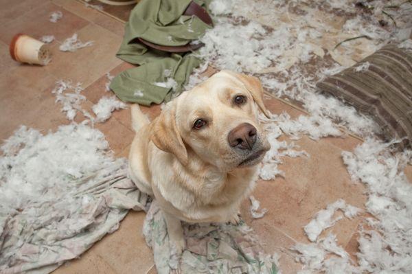 Image result for Почему не надо заводить собаку?